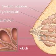 infografica sull'anatomia del seno