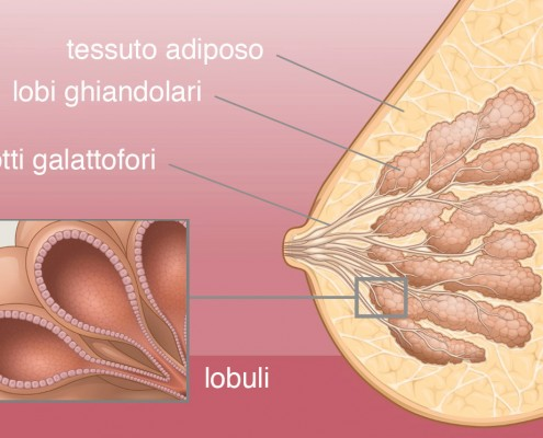 anatomia-495x400 BLOG